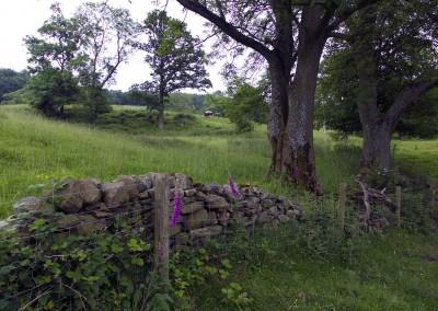 Natur England Steinmauer web image