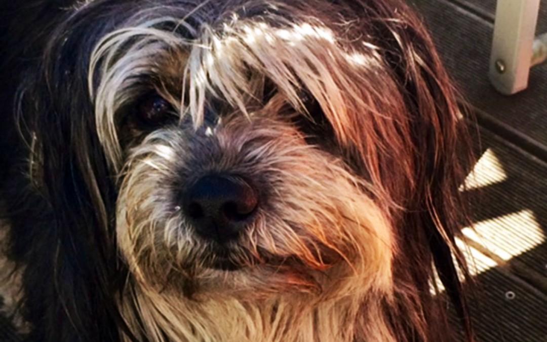 RUDI RELAXED – DANK DOG-WALKER HUNDETRAINING
