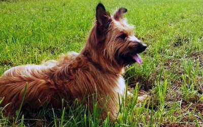 PERSONAL HUNDE-TRAINING FÜR DOG