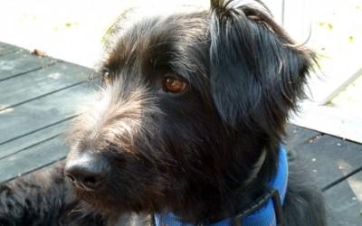 PURZEL IN DER DOG-WALKER HUNDESCHULE