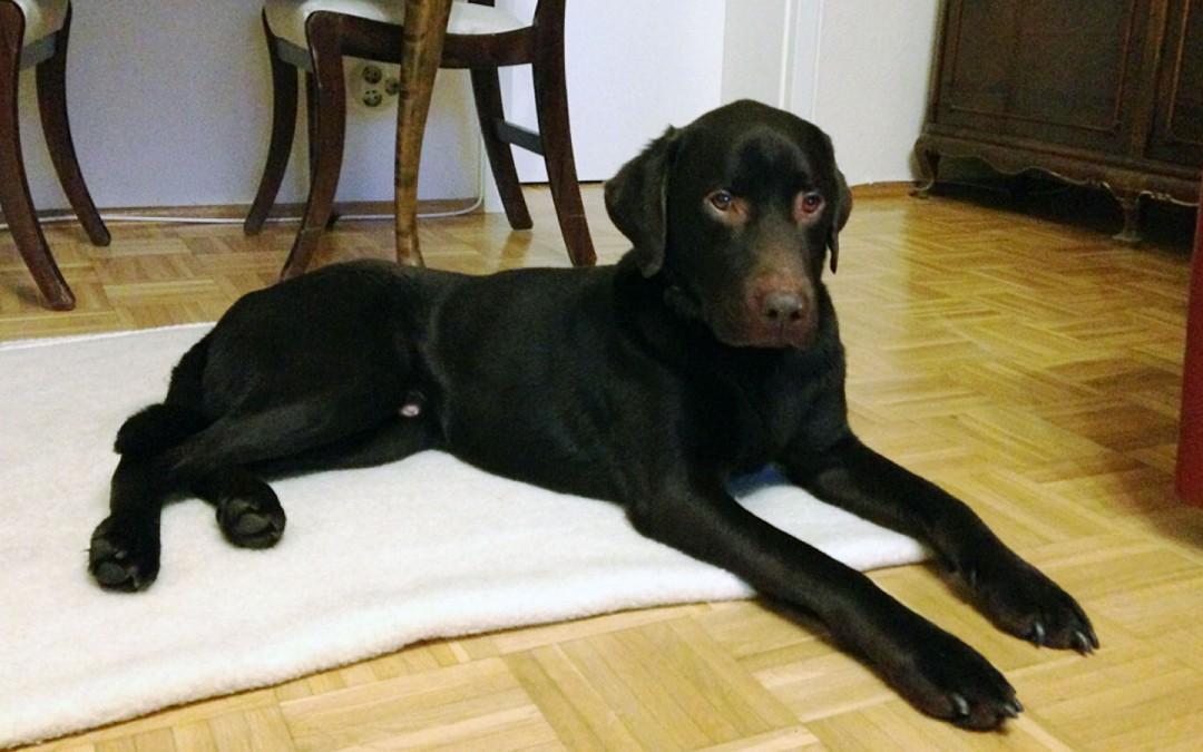 MAILO UND DER DOG-WALKER