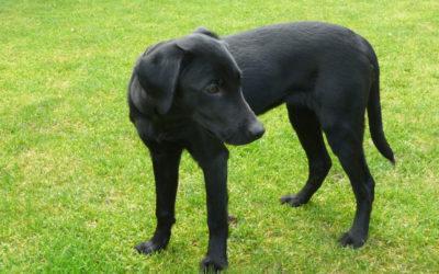 Hundetraining für Dana
