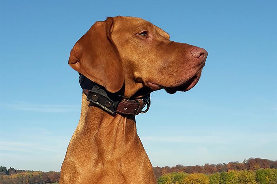 Hundeschule und Hundepension für Laszlo