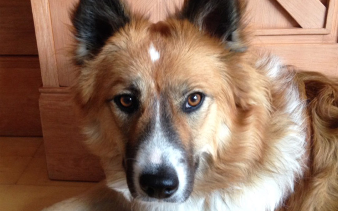 Fräulein Betty in der Hundeschule