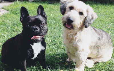Bruno und Fritz – Hundetraining im Doppelpack