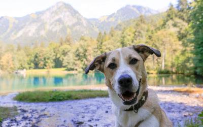 Marley – ein gut erzogener Problemhund