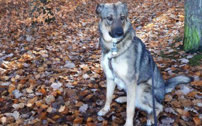 Hundeschule und Training für Ley