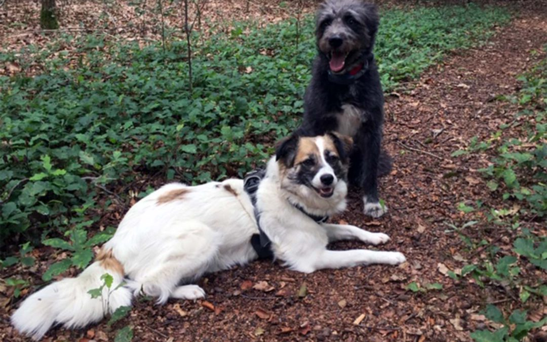 Hundetraining im Doppelpack